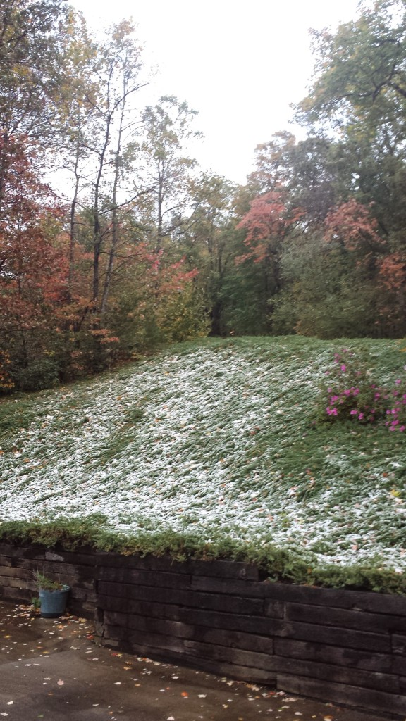 November Snow with Leaves and Azaleas